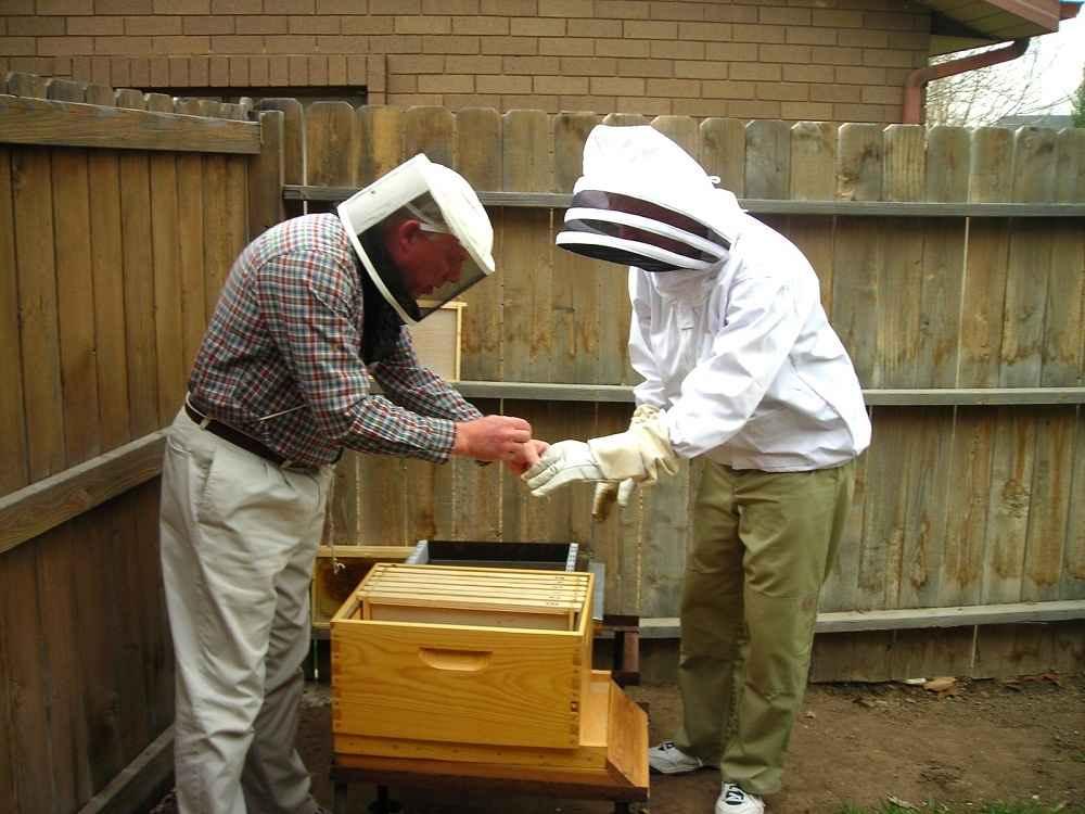 آموزش زنبوردار مبتدی
