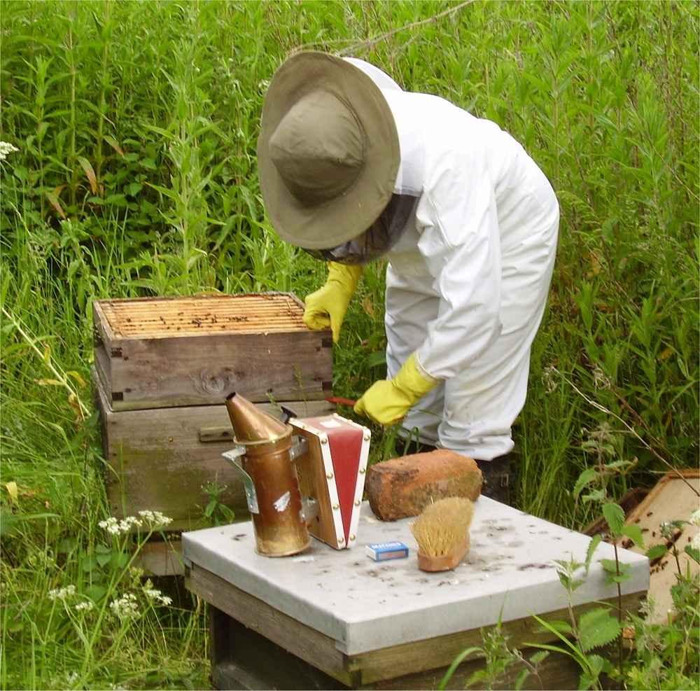 بازدید از کندوی زنبور عسل