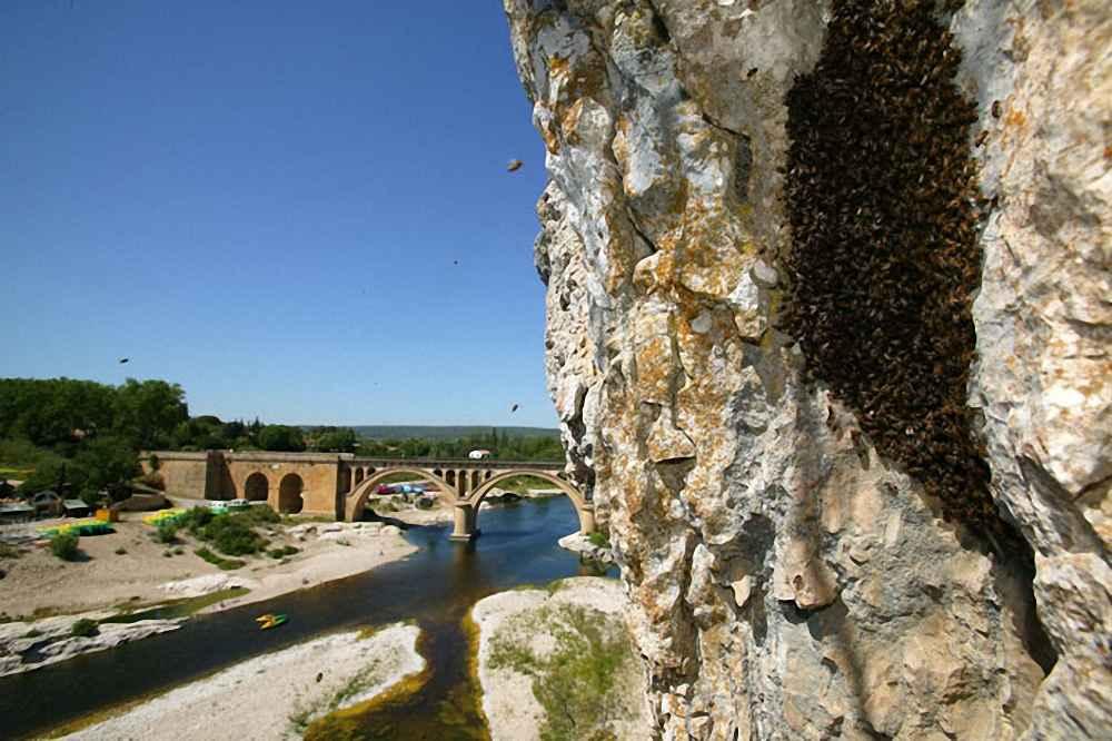 بچه زنبور عسل زیر صخره