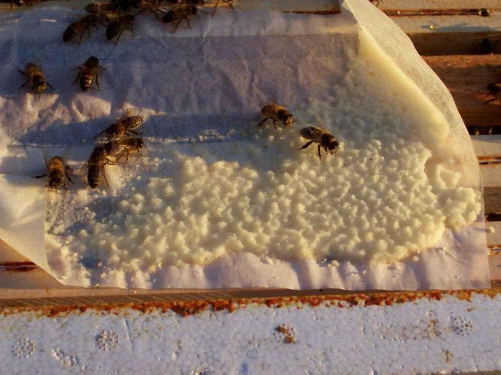 تغذیه زنبورها با شکر تخته