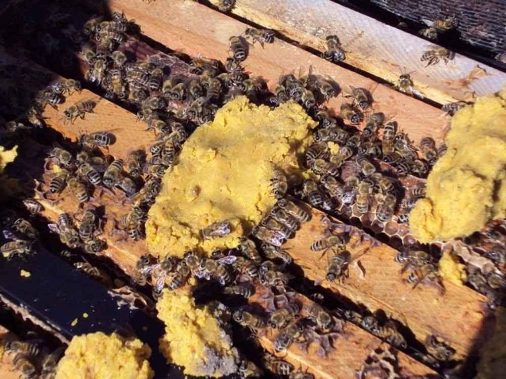 تغذیه زنبور عسل با کیک گرده