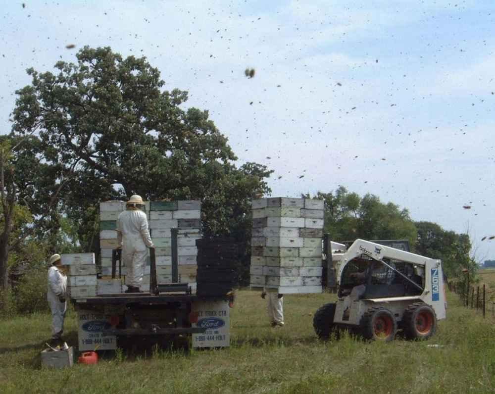 جا به جایی یا مهاجرت دادن کندوهای زنبور عسل