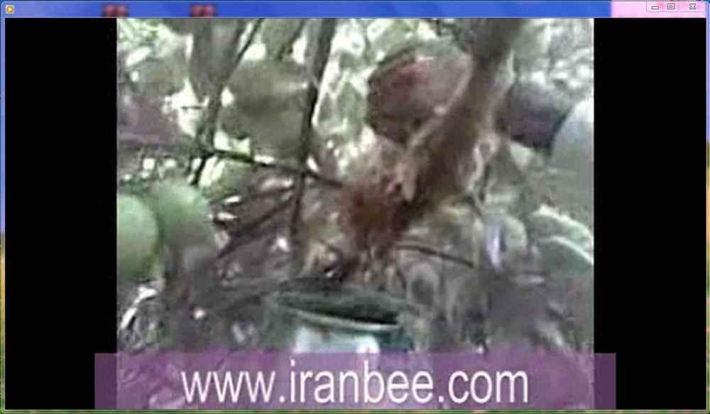 دانلود فیلم برداشت عسل وحشی از روی درخت