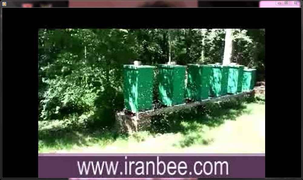 دانلود فیلم پرواز بچه طبیعی زنبور عسل