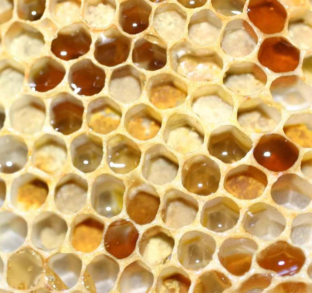 ذخیره عسل و گرده درون شان زنبور عسل