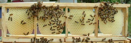 روش تولید انواع عسل شان-14