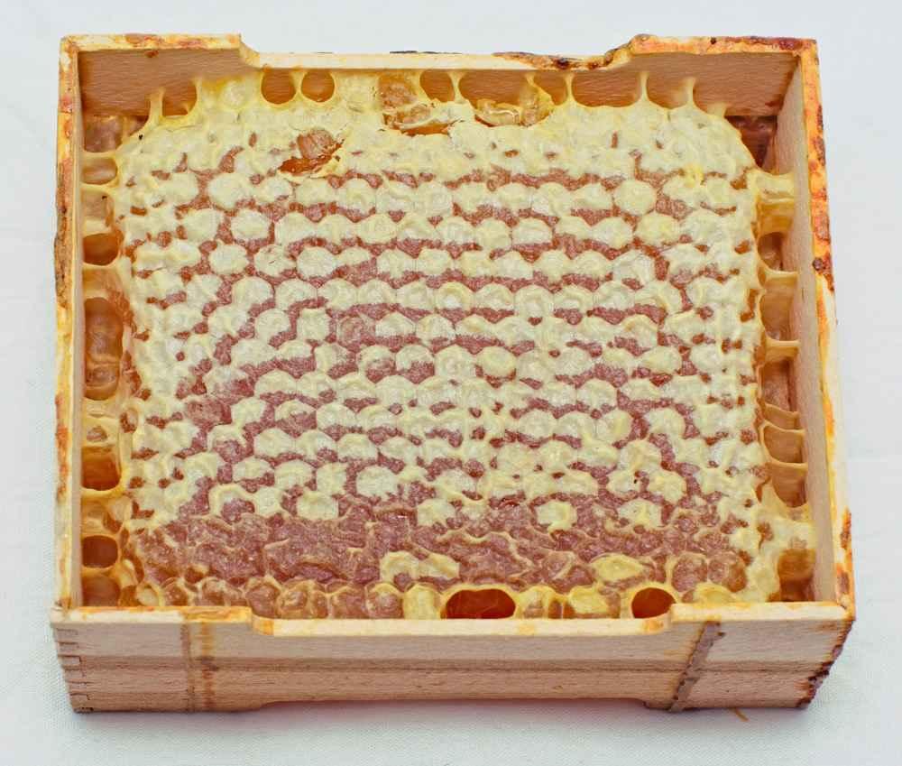 روش تولید انواع عسل شان-17