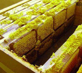 روش تولید انواع عسل شان-27