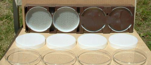 روش تولید انواع عسل شان-6
