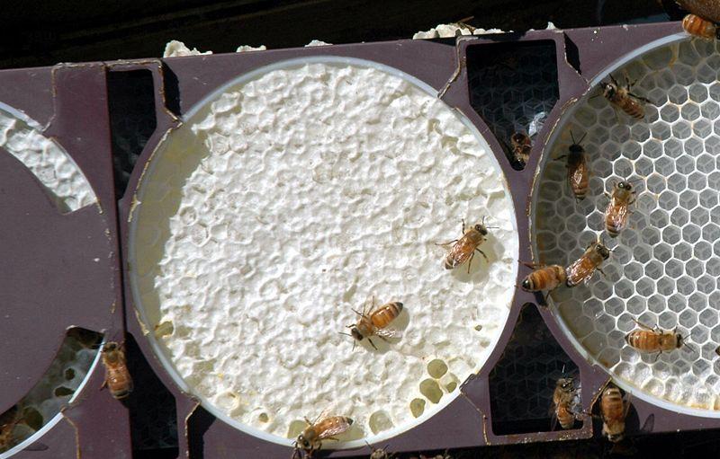 روش تولید انواع عسل شان-8