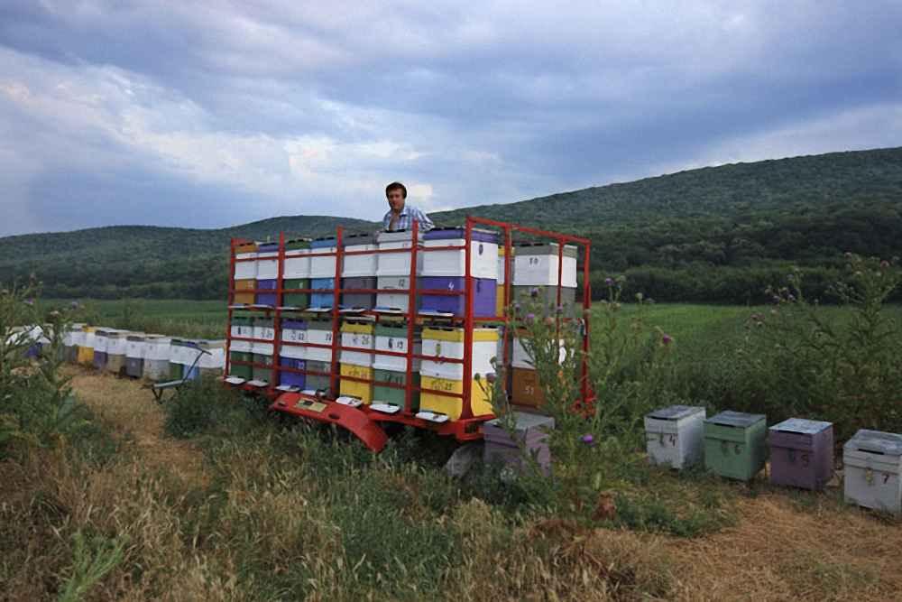 زنبورداری مهاجرتی