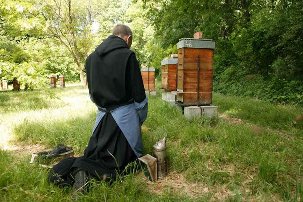 زنبور داری برای تولید موم کلیسا