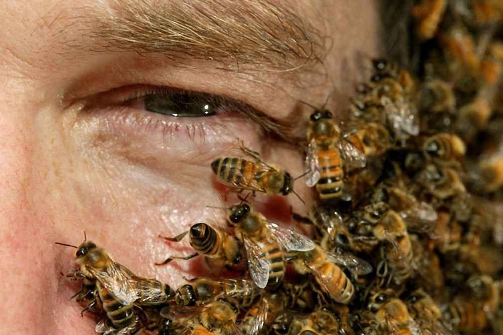 رفتار زنبور عسل در دفاع از کلنی