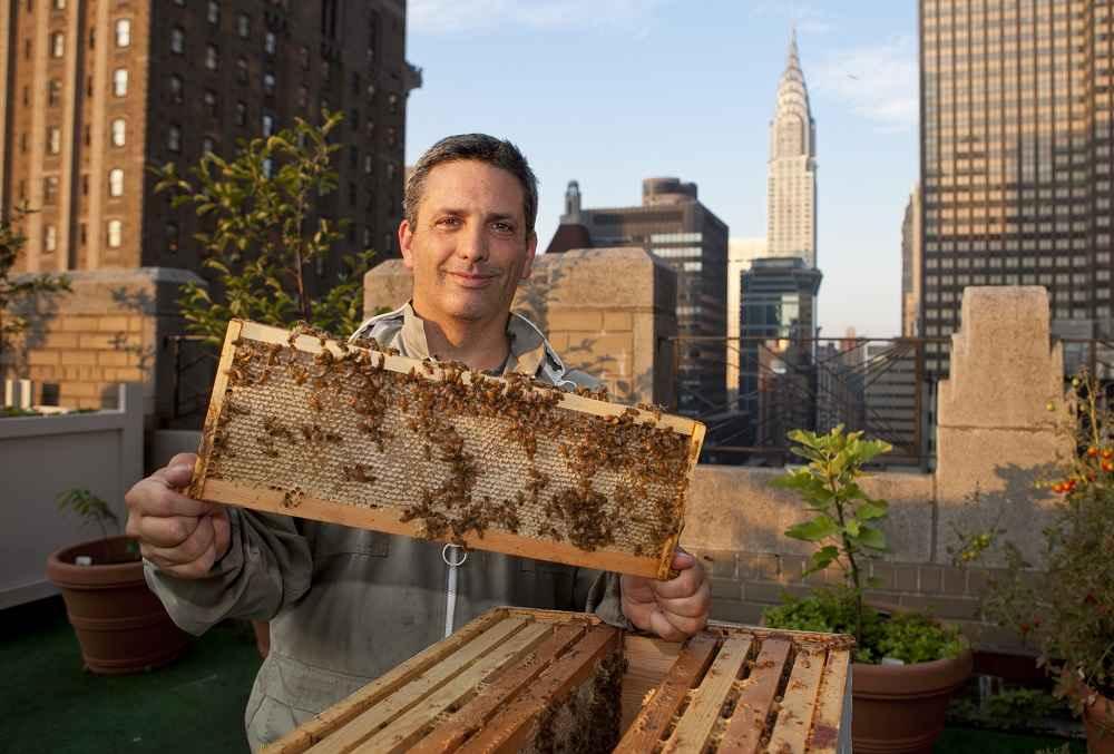 شروع زنبورداری - 1