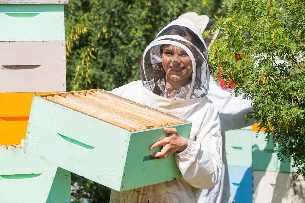 شروع زنبورداری - 2