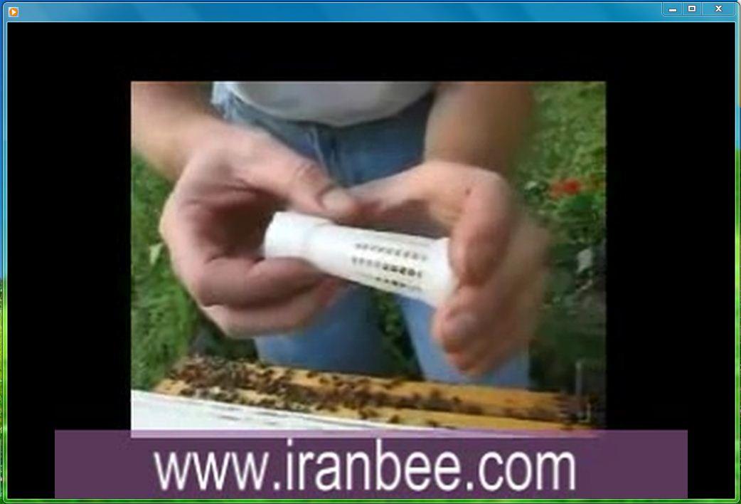 علامت گذاری ملکه زنبور عسل
