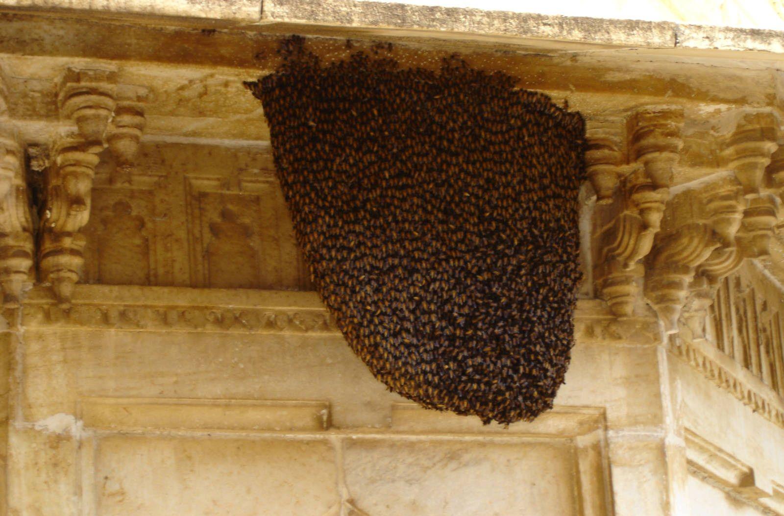 لانه زنبور عسل زیر سقف یک منزل