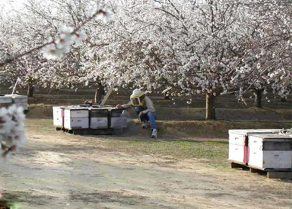مکان مناسب برای زنبورستان