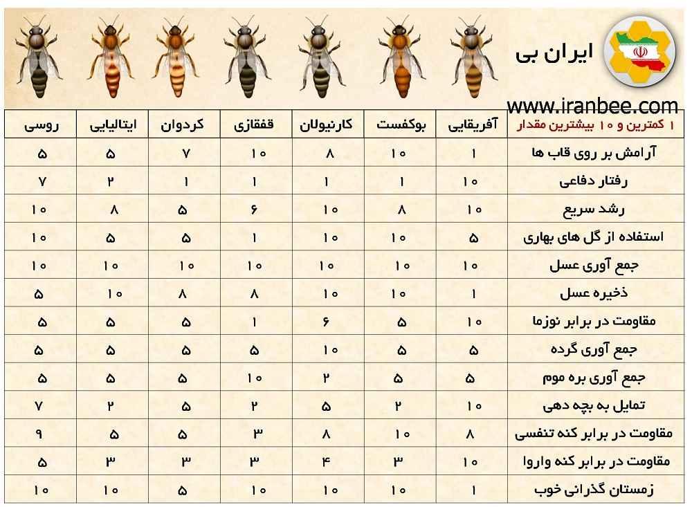 نژادهای زنبورعسل