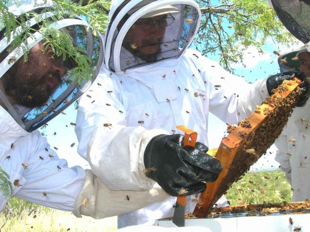 پیدا کردن ملکه زنبور عسل