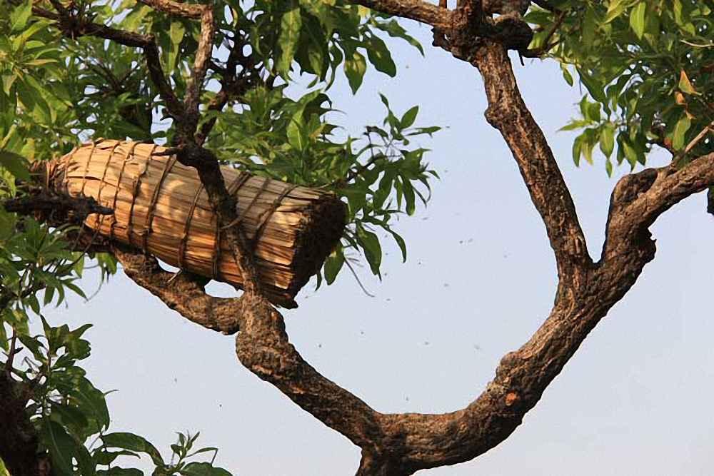 کندوی زنبور عسل حصیری