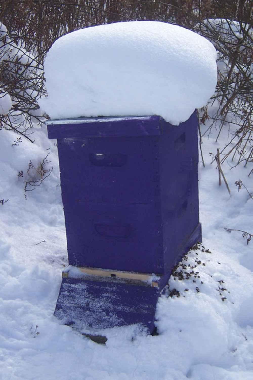 کندو در زمستان
