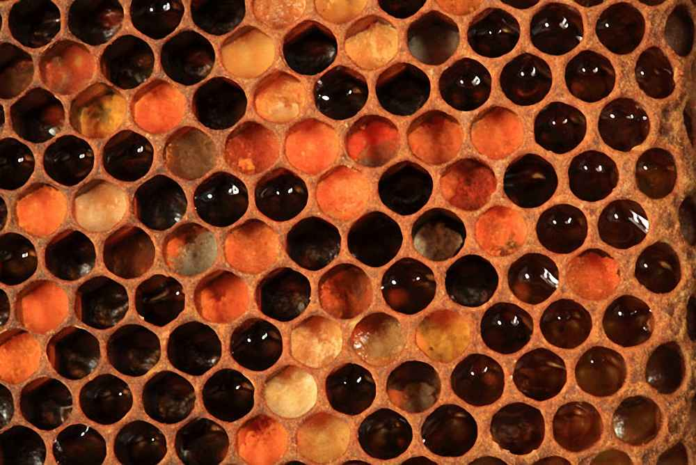 گرده گل و عسل ذخیره شده برای تغذیه