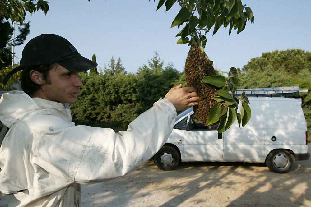 یک بچه طبیعی زنبور عسل بالای شاخه