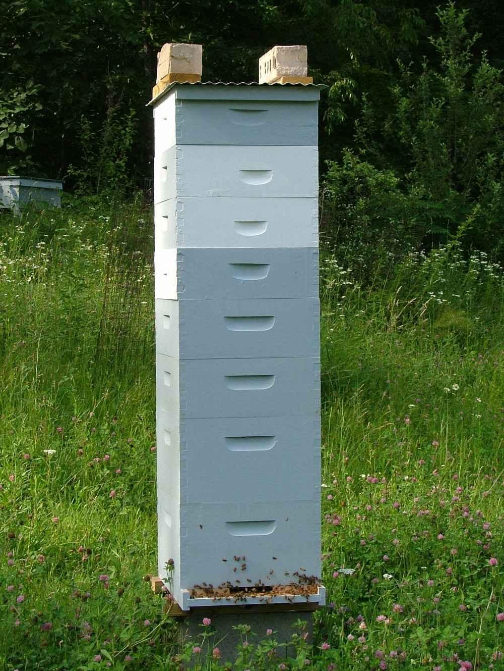 یک کندوی زنبور عسل بسیار قوی